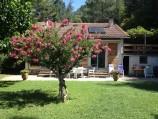 De bloeiende boom in augustus
