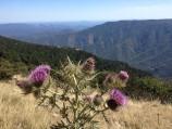 Mont Aigoual in de zomer. Van hier uit kun je onze berg ook zien.