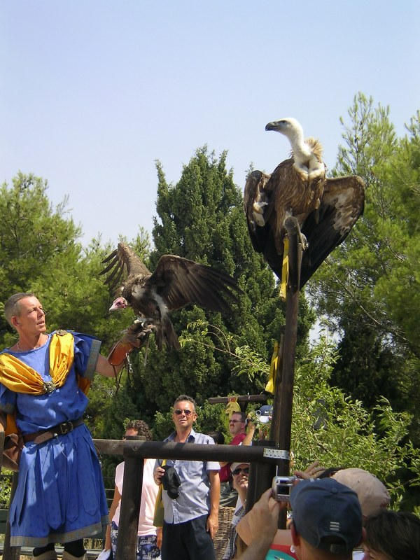 roofvogelshow